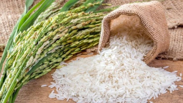 Top 10 Rice Producing States in Nigeria Currently