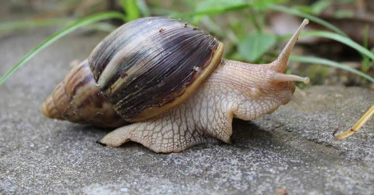 How To Start Snail Farming Business In Nigeria